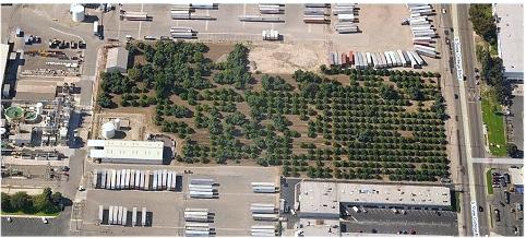 Remnant grove in Fullerton