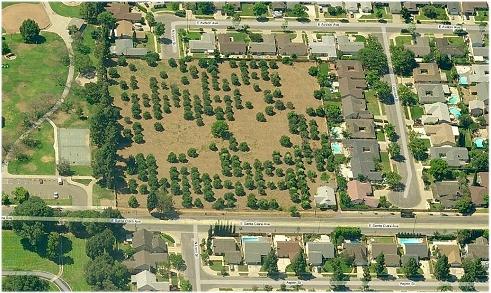 Santa Ana grove